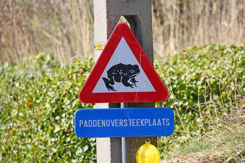 Steendorp - Scouselestraat - Paddenoverzet (16/03/2014)