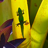 Gecko in Sunshine