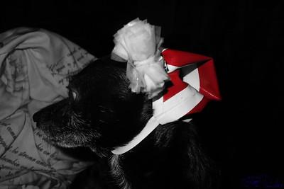 Wer möchte darf sich diese Fotos runter laden auf https://www.btmfilm.com/Gelsenkirchen/Weihnachtshund/ um damit ein besonderen Weihnachtsgruß zu kreieren... Voraussetzung dafür ist das mein Name weiterhin auf dem Foto sichtbar bleibt und somit das © nicht verändert wird.
