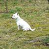 dog sitting49 March08