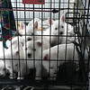dog sitting25 March08