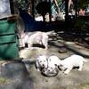 dog sitting29 March08