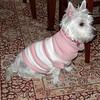 dog sitting09 March08