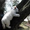 dog sitting14 March08