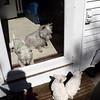 dog sitting30 March08