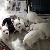 dog sitting04 March08