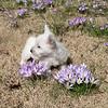 dog sitting11 March08