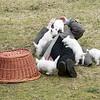 dog sitting52 March08