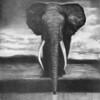 Elephant - 2010