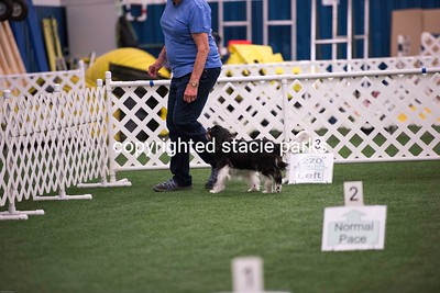 Level 2,3 and vets trial one