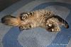 My Broken Cat :-)