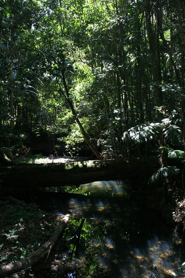 Bundaroo Creek