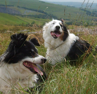 Ghyll and Louie