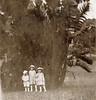 A large banana tree