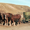Bud Galey with team of horses - probably Tin Camp Ranch