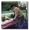 """Spring Planting""<br /> Pepere Wilfred getting the flowers ready for planting."