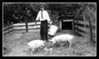 """The Well Dressed Farmer""<br /> Pepere Wilfred Hall feeding the pigs, Pigley & Widley, 1948."