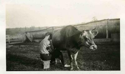 Milking.