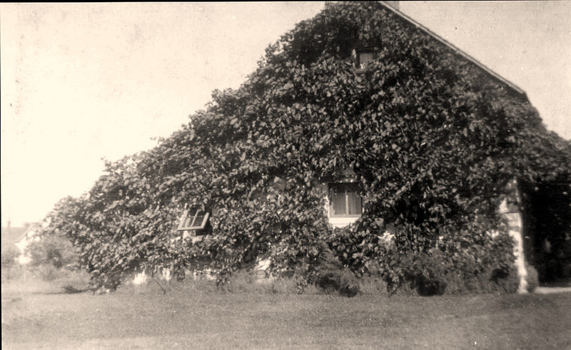 Ivy-covered Liebe cabin