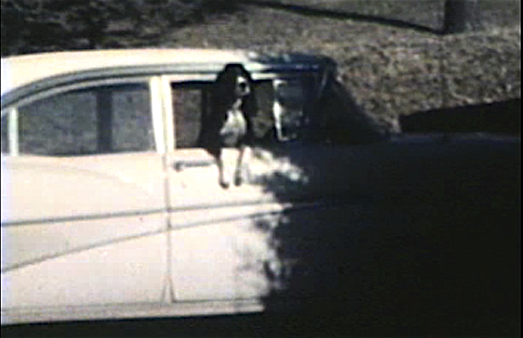 1960 Sioux CIty, IA Kuki hanging out of window of 1958 Ford Galaxy in driveway at 3630 Jennings St.