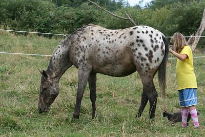 horse 020