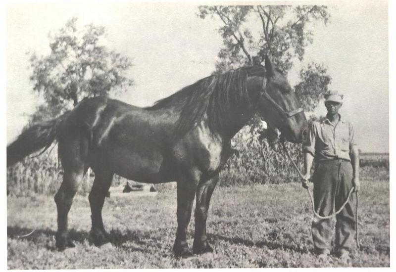 Oscar Stein with Draft Horse