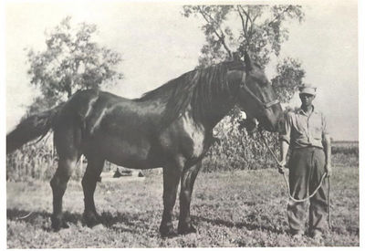 Oscar Stein with Draft Horse
