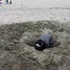 Seaside<br /> 8.13.15