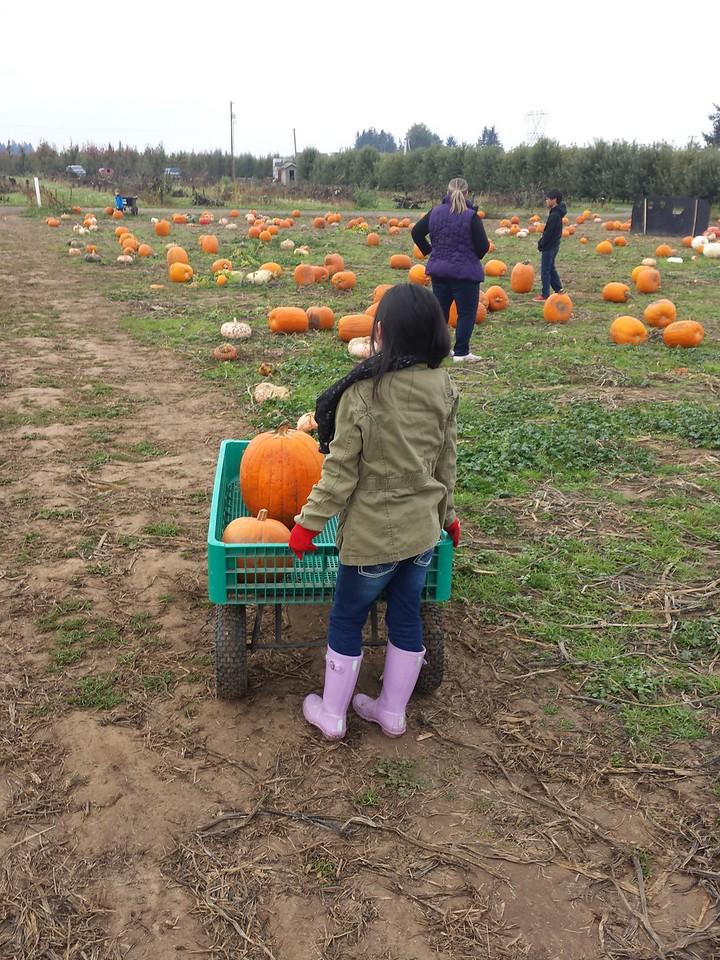 10.24.15<br /> EZ Orchards Pumpkin Patch