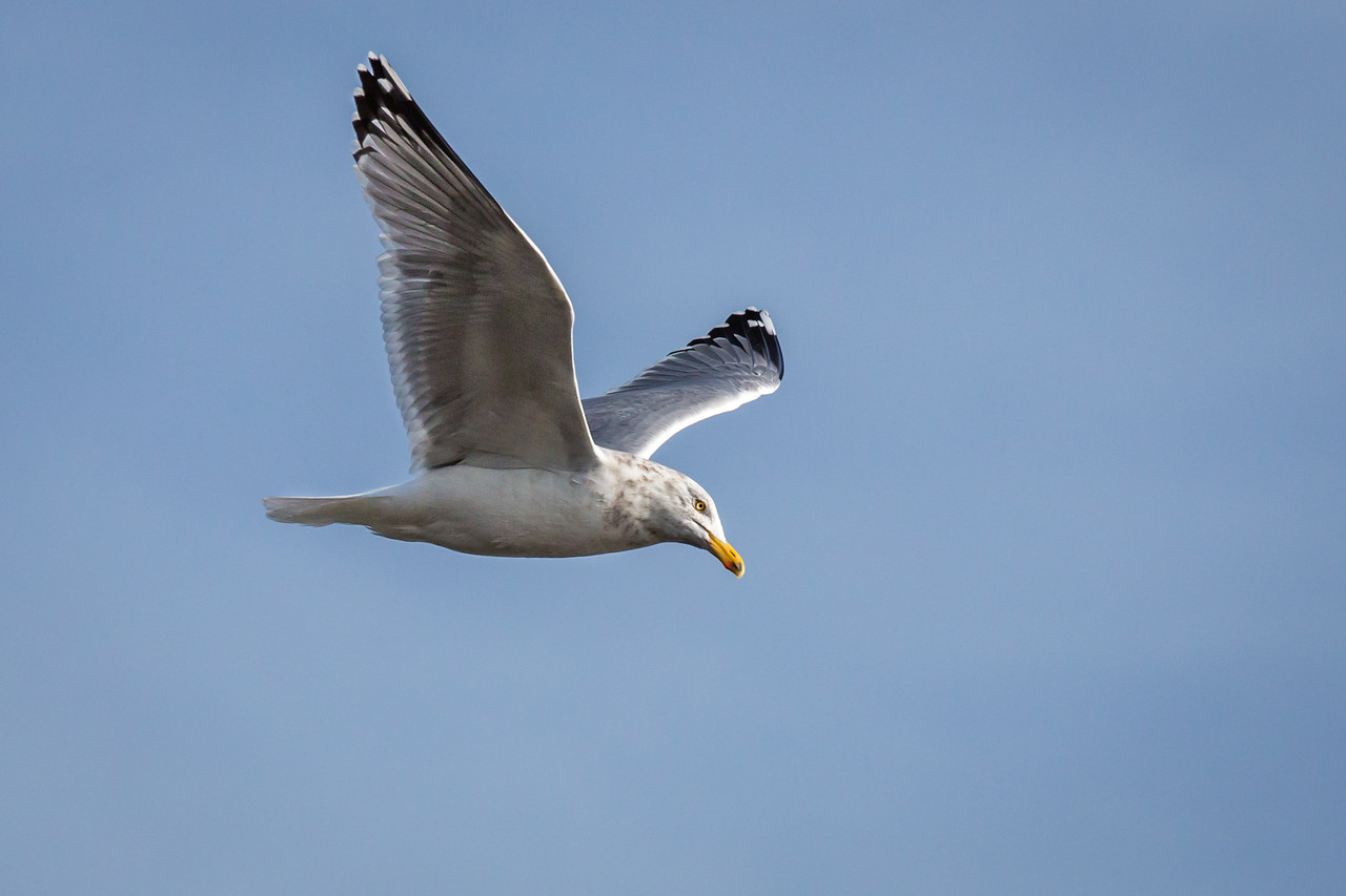 Always have to catch a seagull when at the coast..