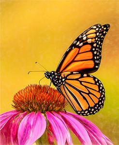 Monarch and cone 2020