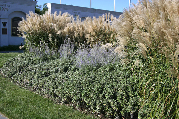 Grasses and Ground Covers