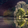 Lake District Trees