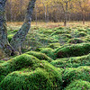 Moss in Autumn