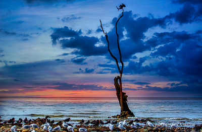 Coastal bird life at dusk in Nelson