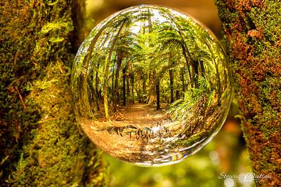 Glass ball in Redwoods Rotorua