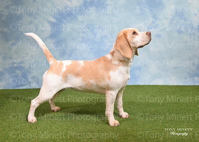 Lich Beagle