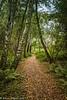 3-Oct-17 Autumn Path