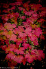 4-Oct-17 Autumn Colour.