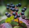 6-Oct-17 Autumn Fruit