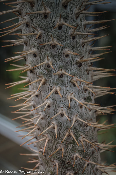 19-May-17 A thorny situation.