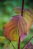 7-Oct-17 Leaf Detail.