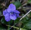 11-Apr-17 Violet.
