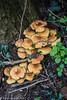 4-Apr-17 Springtime Fungi.