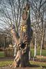 10-Jan-17 Wood Carving.