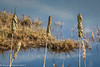 12-Feb-17 Reed Heads