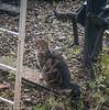 10-Oct-17 Railway Cat.