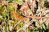 26-Mar-17 First Comma of the Year.