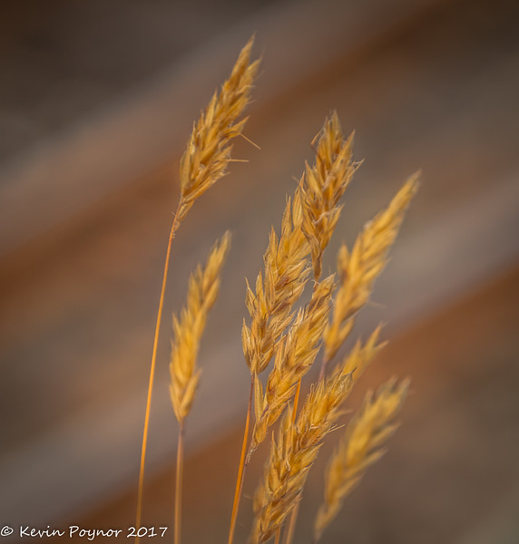 2-Aug-17 Grasses