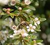 30-May-18 Feeding Bee.